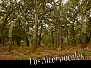 alcornocales