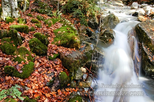 Forest_Spain-129