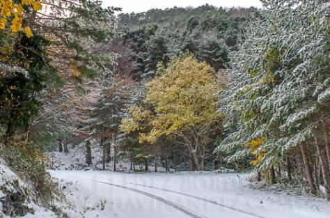 bosques-Invernales-fotografia