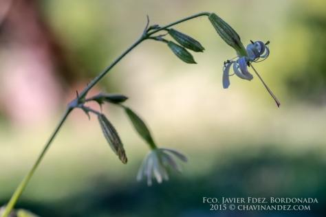 photolocus_macro-12
