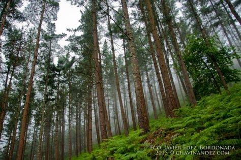 Ereño forest. Urdaibai Biosphere Reserve of Biscay, Basque Country. Spain. Europe
