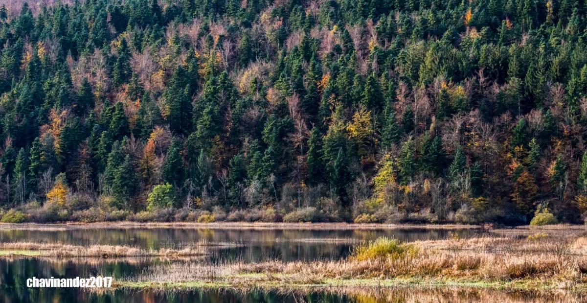 Nuestro último viaje a Eslovenia, entre bosques y osos